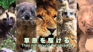いよいよ4月22日に「アフリカのサバンナ」が全面開園します!! 広大な...