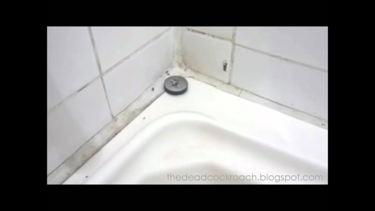 Baby cockroaches in the hotel bathroom youtube for One cockroach in bathroom