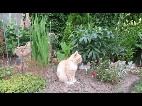 Строительство  гравийной клумбы 'от' и 'до' или каменный сад.