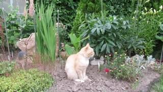 видео Гравийный сад