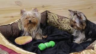 Лежанки / лежаки / купить лежанку / лежанка для собак