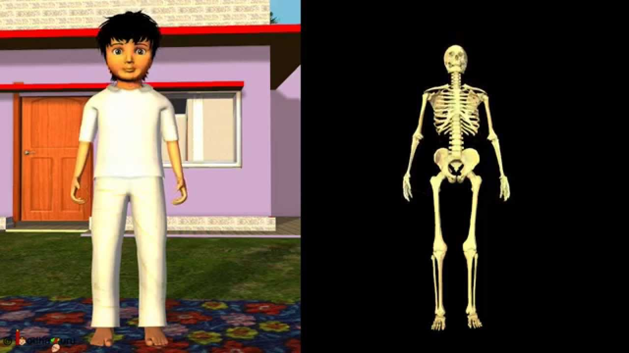science -- how different joints work in human? 3d animation, Skeleton