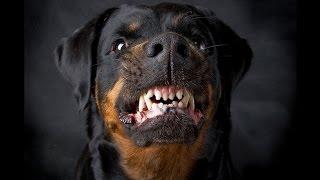 Яма.Злые собаки)))