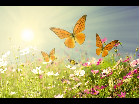 Beautiful Relaxing Music: Peaceful Morning Meditation music by Tim Janis