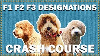 What Does F1, F2, F3, F1b & F2b Generations Mean? | CKC's Talkin' Dogs List Show