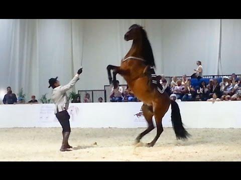 Andalusian Dancing Horse