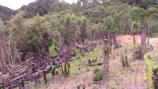 Peb Hmoob kev ua liaj teb nyob Laos 2016 part 2