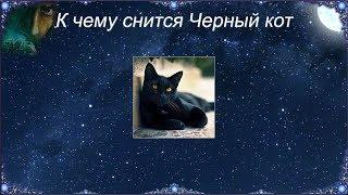 К чему снится Черный кот (Сонник)