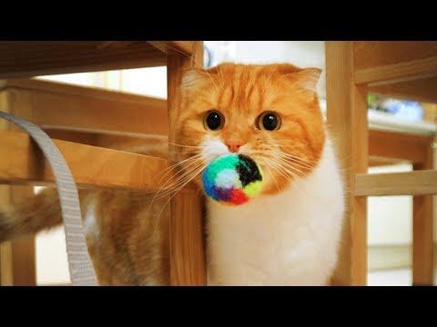 고양이 노을이가 놀아 달라고 할 때 행동들