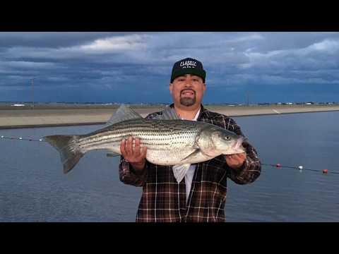 California Aqueduct Fishing 34 1/2 Inches 17.7lbs Big Striped Bass