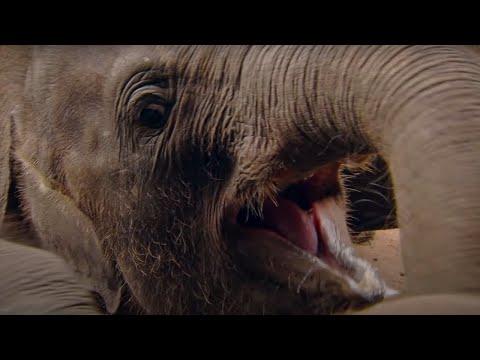 Heartbreaking: Baby Elephant Orphanage - Sri Lankan - Indian Ocean with Simon Reeve - BBC