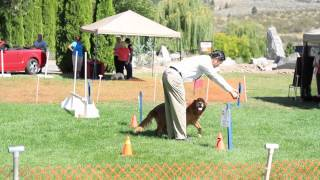 Skaha Kennel Club - Rally Obedience Advance B - Spirit Of Vancouver (champ) - Tony Kim