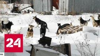 В Солнцево не могут справиться со стаей бездомных собак, нападающих на людей - Россия 24