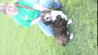 Meet Nelson A Spaniel English Springer Currently Available For Adoption At Petango.com! 4/30/2015 9