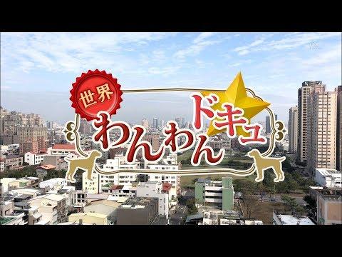 NHK BSプレミアム  世界狗狗紀錄☆「台灣.台南」CC 繁體中文字幕 ☆ HD (恭喜在台南的狗狗們上日本電視!)