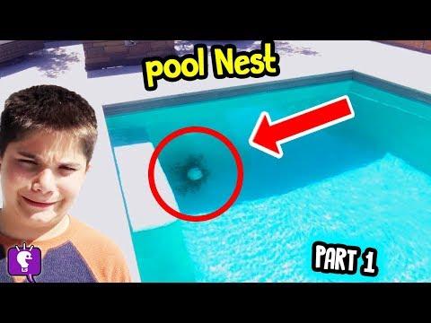 We Find Mystery NEST... PART 1 in Backyard by HobbyKidsTV