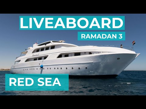 A day on a liveaboard - Red Sea