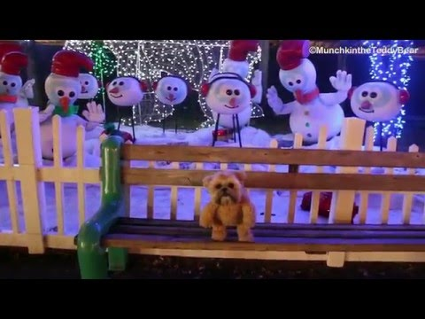 Munchkin the Teddy Bear at Santa's Enchanted Forest