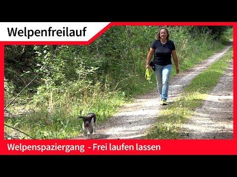 Welpenfreilauf ► Welpen ohne Leine frei laufen lassen ► Hundefreilauf