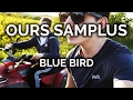 Ours Samplus Blue Bird MarzBarVlogs Music mp3