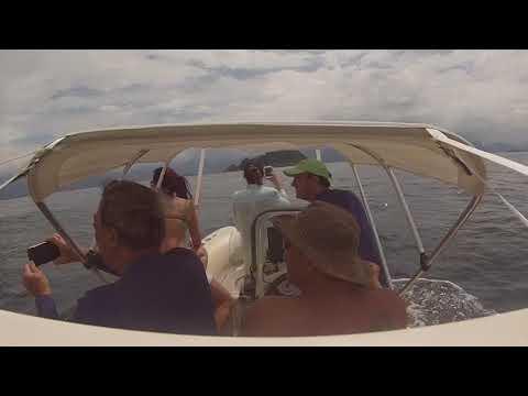 Expedição Ilha das Coves - Ubatuba / SP - Com centenas de Golfinhos.