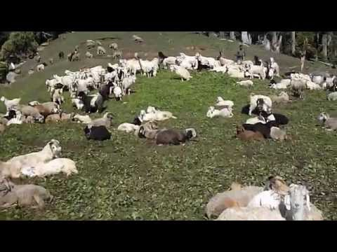 How to separate sheep and goats?