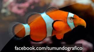 Tutorial Photoshop: Fotomontaje animal imposible