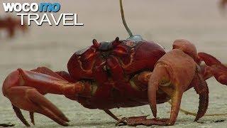 Die Krabbenflut (360° - GEO Reportage)