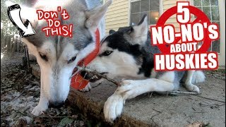 5 No-No's When Owning A Husky