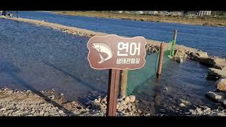 양양 남대천 연어 생태관람장