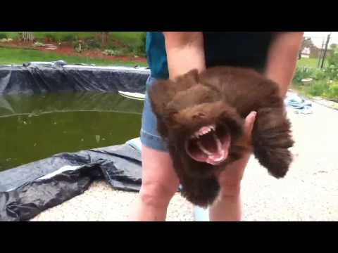 funny-dog-vs-leaf-blower