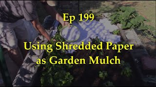 VermiBag  Ep 199    Using Shredded Paper for your Garden Mulch