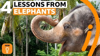 What elephants can teach us about life | BBC Ideas