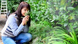 Прованс - Прованские травы - как собирать и приготовить приправу из прованских трав