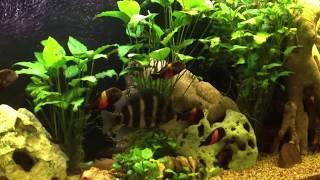 6-ти тонный аквариум в Доме Природы(Дом природы. Приходите на экскурсии. Звоните 0634741843 Растения можно купить. http://aquaclean.kiev.ua/pages/Servise., 2013-04-14T23:00:26.000Z)