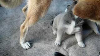 ワンコの授乳シーンです^m^ 母犬、立ったままですけど・・・(^_^;)