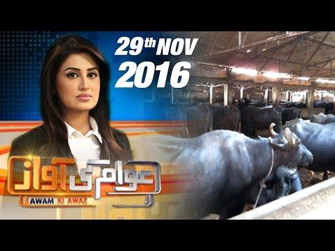 Bhains Colony Mein Qatl   Awam Ki Awaz   SAMAA TV   Farah Yousuf   29 Nov 2016