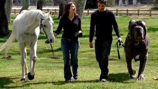 Самые большие собаки в мире!