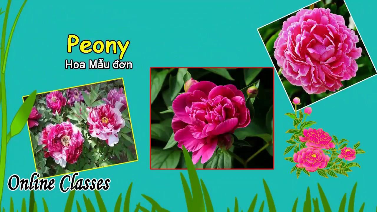 Học tiếng Anh bằng hình ảnh ❤ Tên các loài hoa bằng tiếng Anh ❤ Names of Flowers ❤