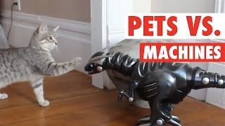 Pets vs Machines