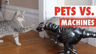 Pets vs Machines