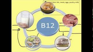 Vitamin B12 absorption