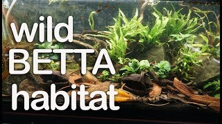 How to clean the substrate in a tank with botanicals (leaves and pods)