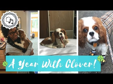 A Year With Clover   Clover's Homecoming Anniversary!
