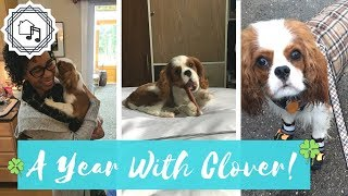 A Year With Clover | Clover's Homecoming Anniversary!