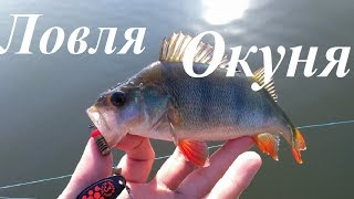 Ловля ОКУНЯ В ИЮНЕ на Спиннинг. Рыбалка на ОЗЕРЕ.