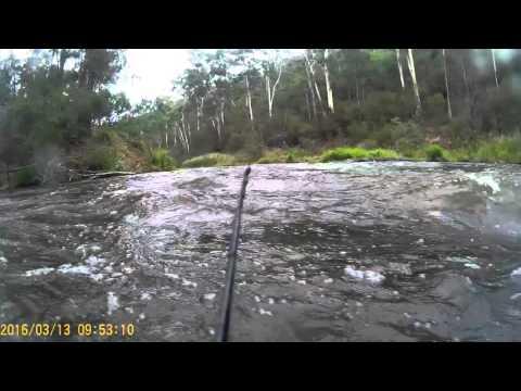 Yarra Whitewater kayaking Warrandyte