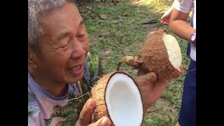 Coconut Farm Field Trip