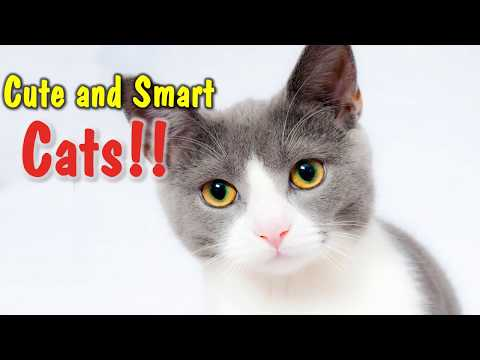 Lovely, Cute, and Smart Cats!