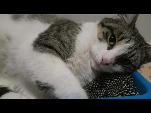Feral Cat Comes Inside Again - Cat Sleeping In Bed